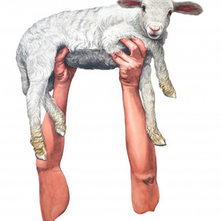 Scott Ponemone Meat-Lamb-690x876-690x876