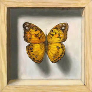 Frozen Gold (Butterfly)