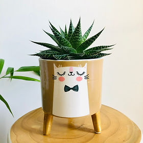 Love Haus Potted Plant.jpg