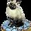 Thumbnail: SIAMESE CAT, LIMOGES BOX