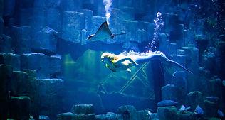 Show sirene pour soiree aquarium