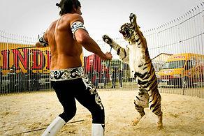 Animal tigre pour evenement et soiree