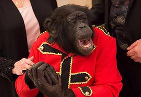 Animal singe pour evenement et soiree