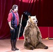 Animal ours pour soiree et evenement