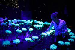 Décoration fleurs luminescentes