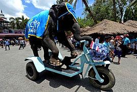 Animal elephant pour evenement et soiree