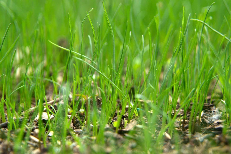 grass_seed_background.png