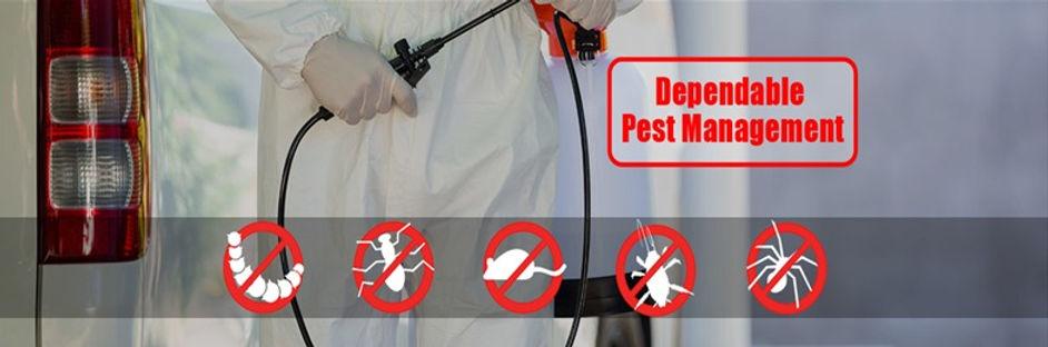 pest2_edited.jpg