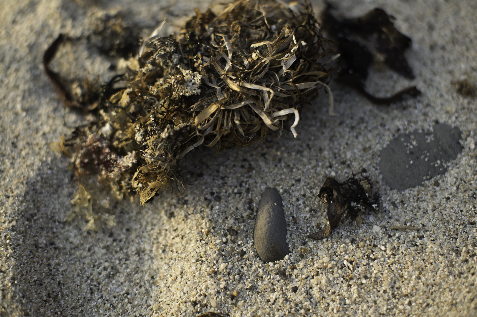Sand and Seaweed