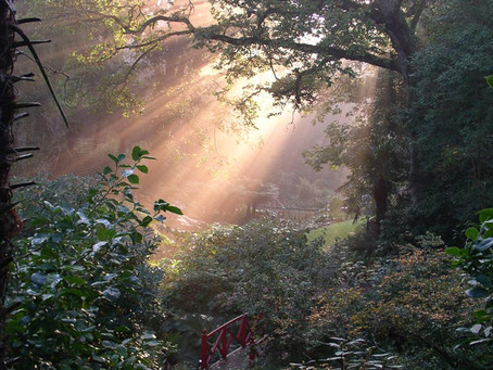 Explore Abbotsbury Tropical Garden