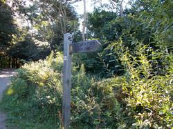 Langdon Hill, Dorset