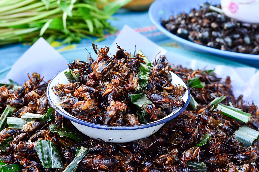 insects for dinner
