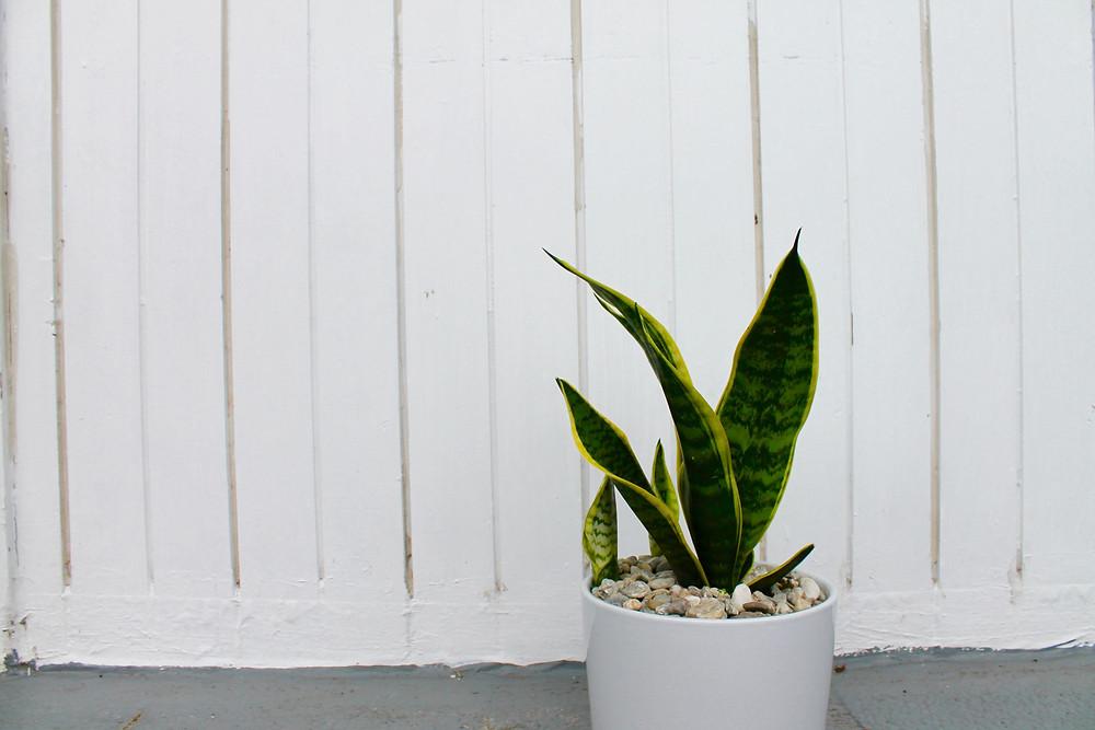 best indoor plants for sale