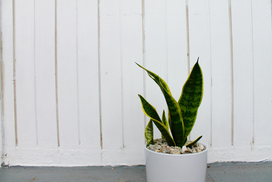 The Best Indoor Plants for Sale