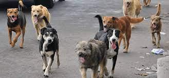 Los Perros de mi barrio ( El Hoyo)