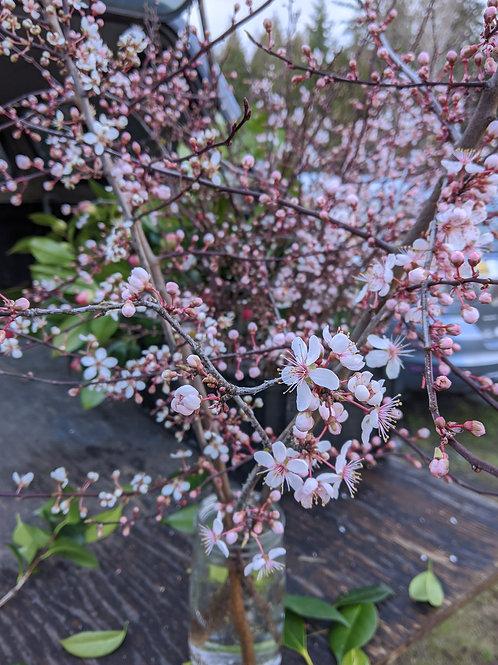 plum blossom bunch