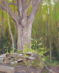 Northeast Forest