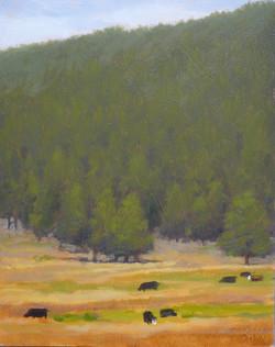 Reynolds Ranch Herd