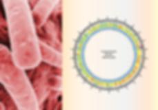 K pneumo genomics.png