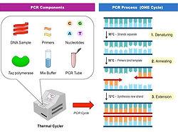 pcr-components_med.jpeg