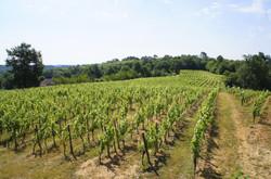 Cahors Wineyards