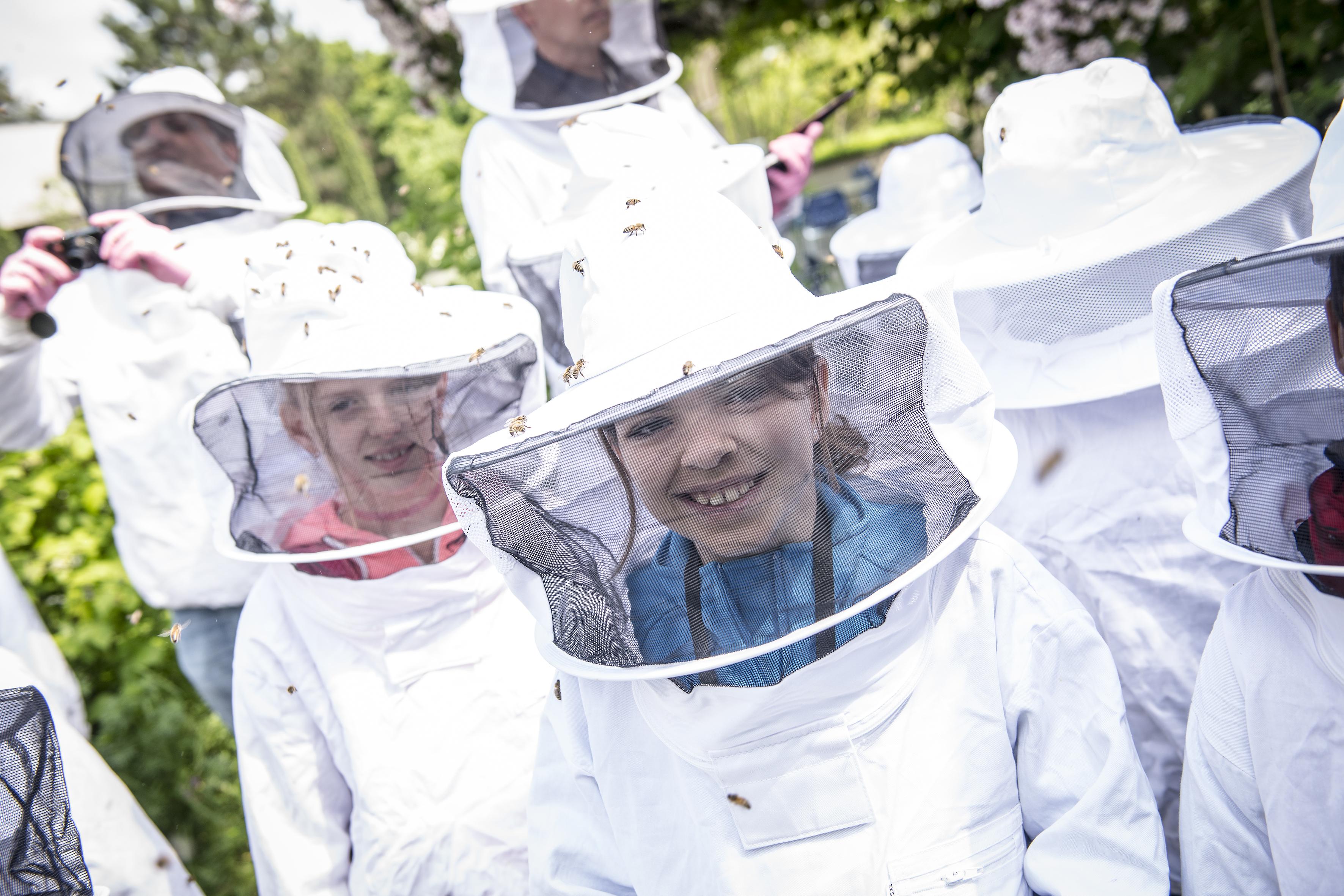Bienen für Schulklassen 3