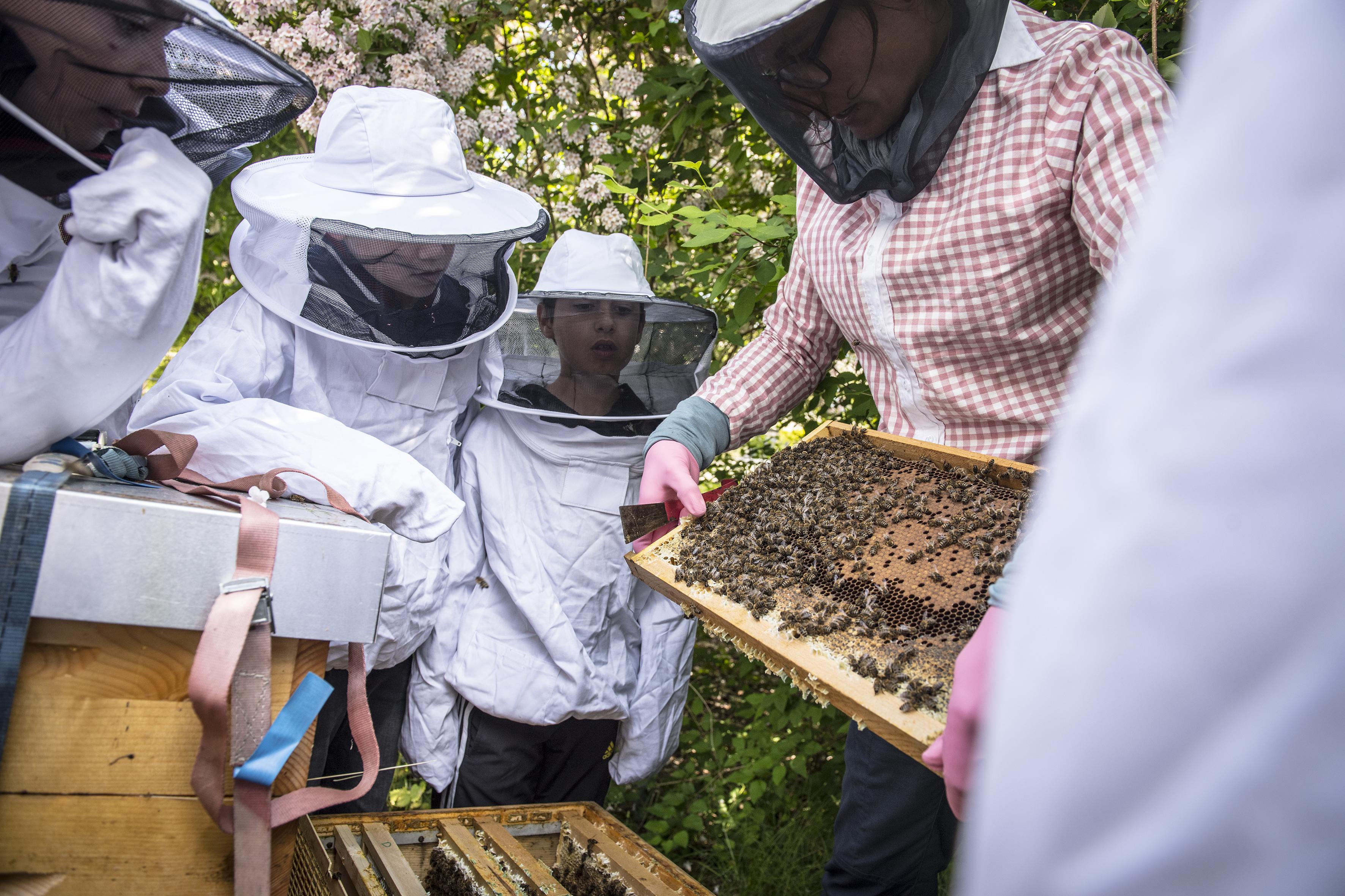 Bienen für Schulklassen 4