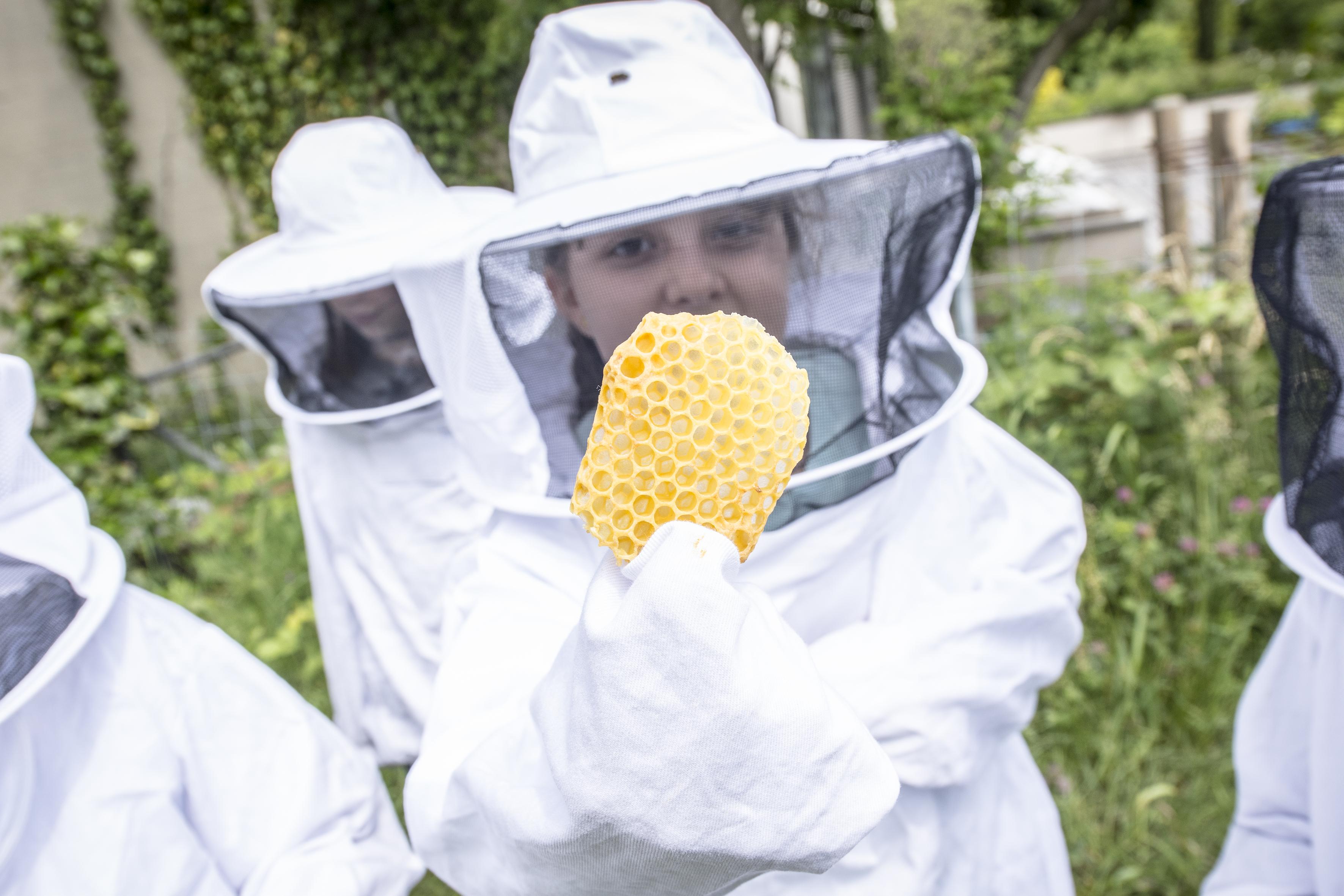Bienen für Schulklassen 5