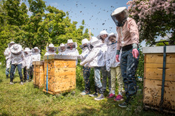 Bienen für Schulklassen 2