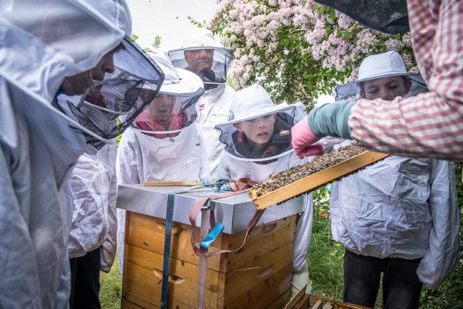 Tag der offenen Bienenkästen 2018