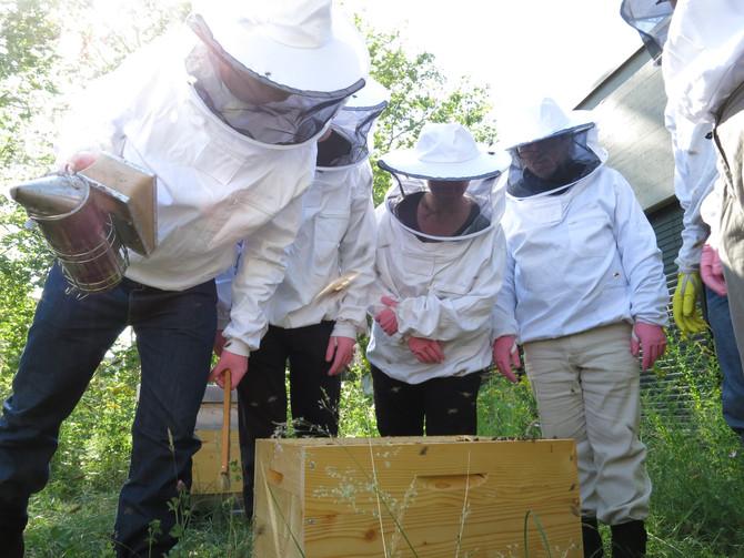 Tag der offenen Bienenkästen