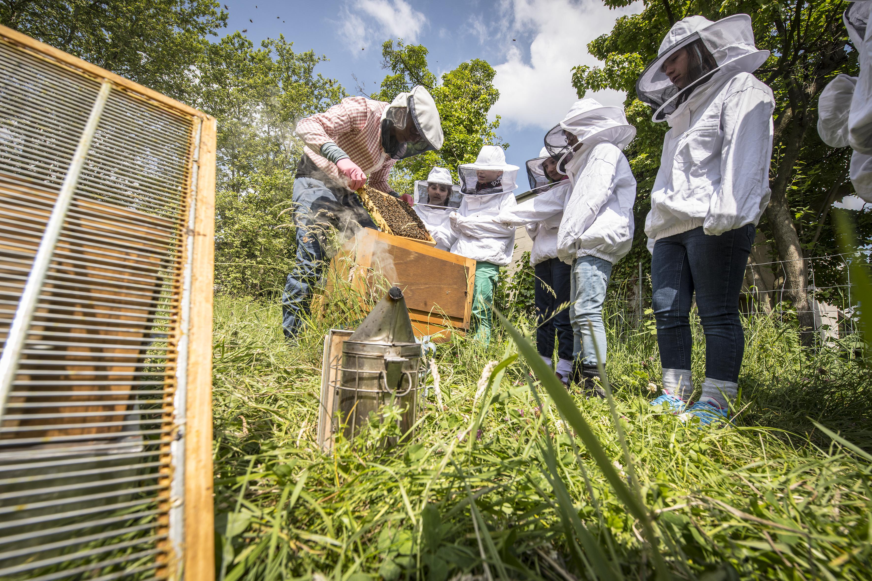 Bienen für Schulklassen 6