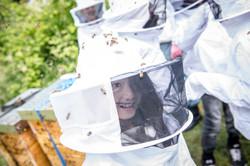 Bienen für Schulklassen 7