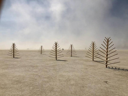 These simple trees appeared on deep playa, a small wooden forest on a barren landscape.