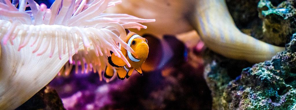 Aquarium Maintenance | Broadley Aquatics