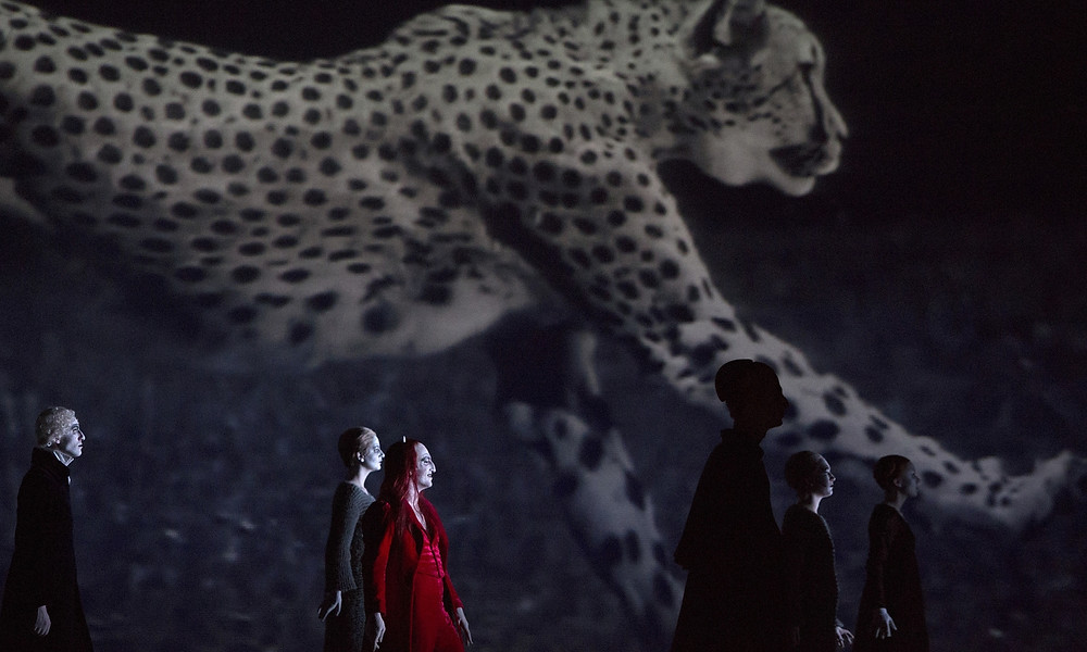faust leopard.jpg