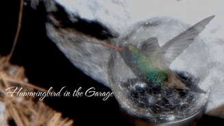 Hummingbird in the Garage - Poetry for the digital age.