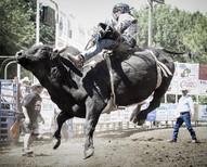 Philomath Frolic & Rodeo