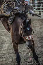 Gem Boise Fair & Rodeo