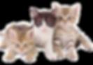 cats santorini greece.png