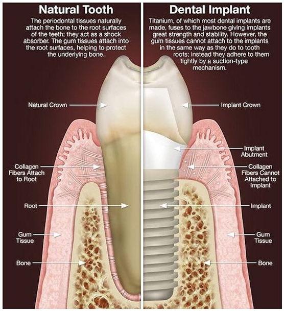 Morehead City Dentist, Dentist Morehead City NC