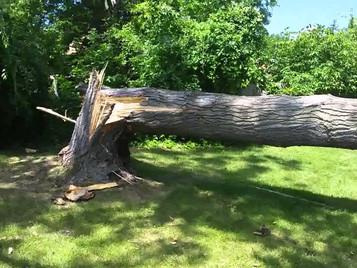 Καλύπτονται στα συμβόλαια κατοικίας και επιχειρήσεων οι υλικές ζημιές από πτώση δέντρων;
