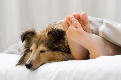 8 Dicas de cuidados com os animais no inverno