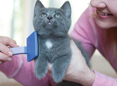 Higienizando o seu gatinho