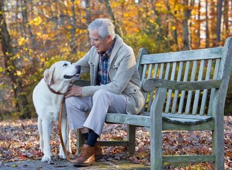 50 Raças de cães que costumam viver mais de 10 anos