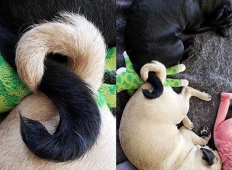 22 Fotos de animais fofos que deixam qualquer dia melhor