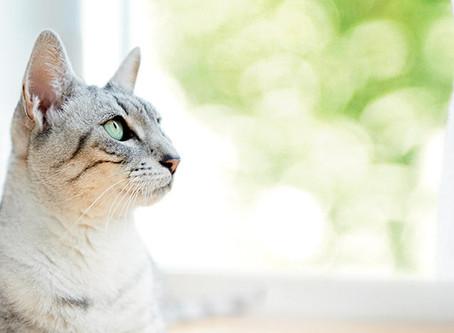 Entenda o comportamento e a linguagem corporal do seu gato
