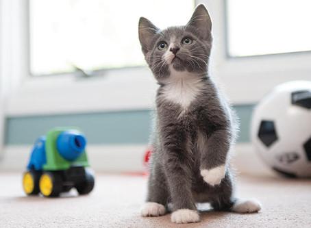 Faça da sua casa um lugar aconchegante para o seu gato