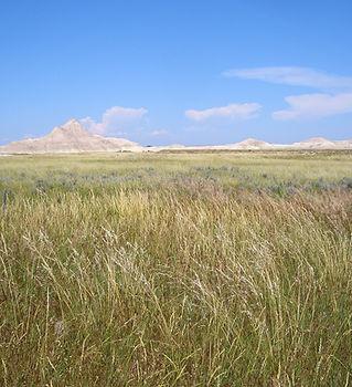 Nebraska-grasslands.jpg