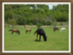 aledo horse boarding,  horse boarding fort worth
